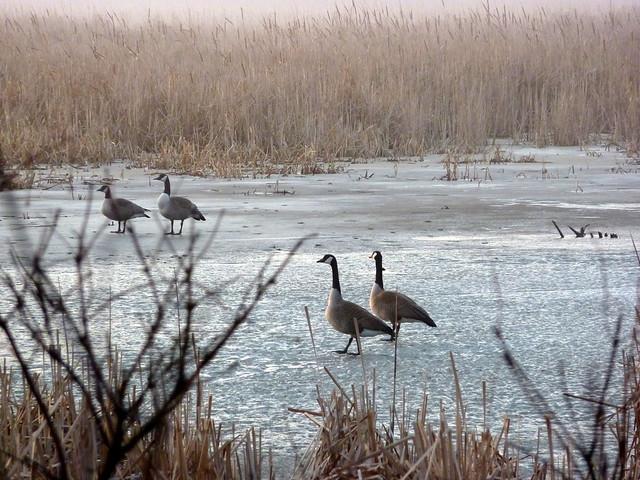 Marsh Inhabited
