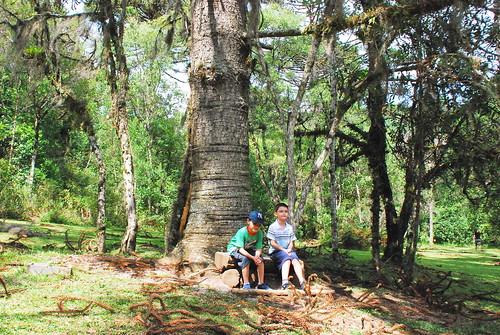 Old friends - Parque do Caracol - Canela