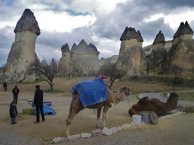 CAMELS IN CAPADOCIA, TURKEY