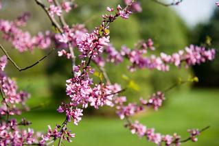 I Love Spring | by Wally Hartshorn