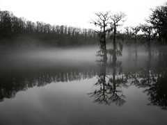 Caddo Lake | by charlie llewellin