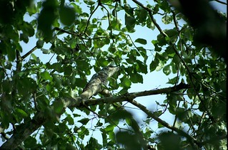 Pantanal wer sieht es