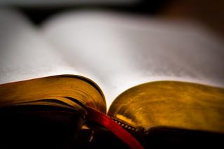 33:365 – Devotion   by charamelody