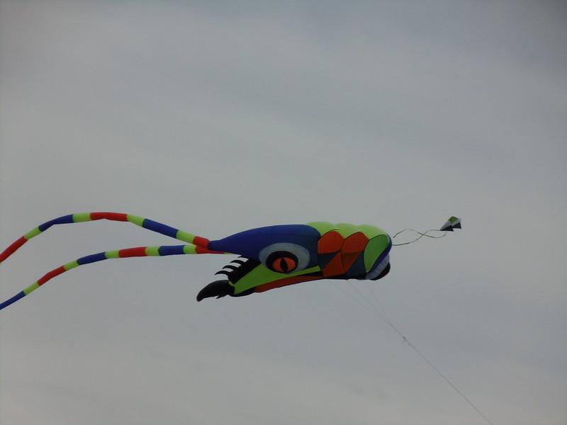 Kite Day 2017