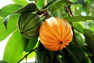 How to Take Garcinia Cambogia
