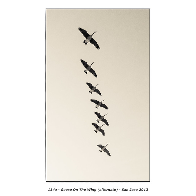 Geese On The Wing (alternate)