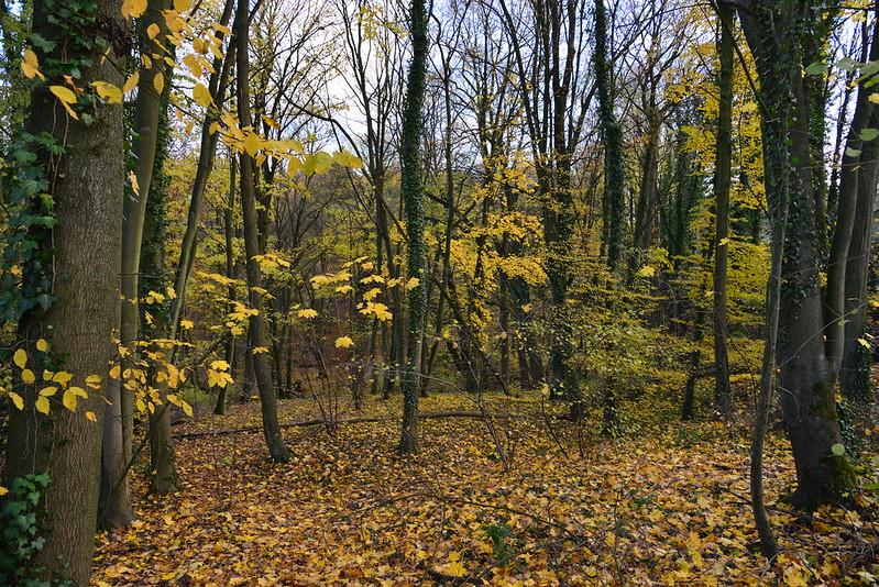 La forêt de Soignes à la fin de l'automne