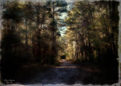 trees sun forest shadows artistic southcarolina textured mygearandme mygearandmepremium sonyslta57