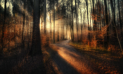 running forest eveningmood eveninglight sunbeams runner foresttrail forestpath zürich käferberg jogging nature february sunsetrun