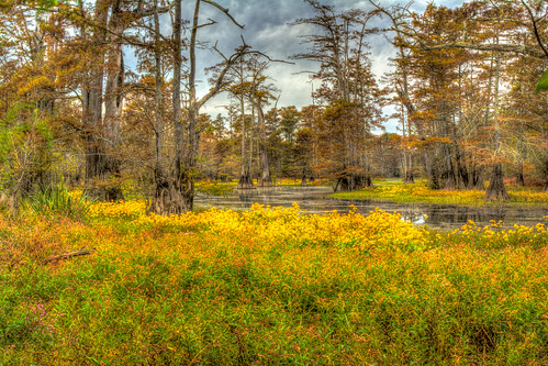 cypress landscape wetlands littlerock arkansas