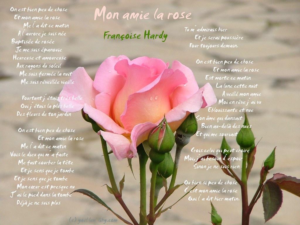 Mon amie la rose ❤♫   © Françoise Hardy   Yael Lew   Flickr