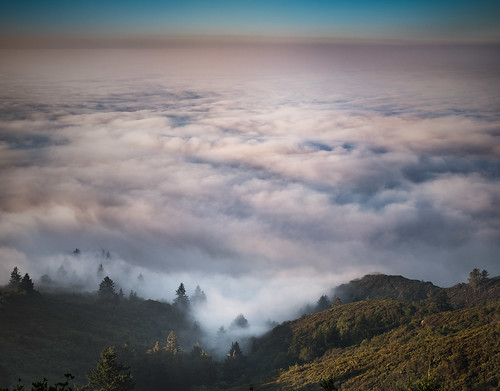 california trees nature northerncalifornia fog forest sunrise landscape photography photo nikon day photograph bayarea marinheadlands mounttamalpais d800 mttamalpais kevinmacleod d800e nikond800e unrangedcom