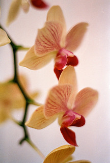 Orchids 4 | by chrism229