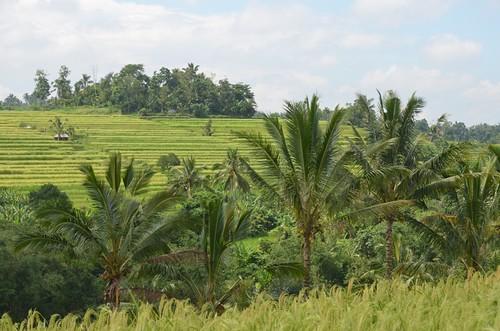 Bali.Dans les rizières.42 | by Antoine 49