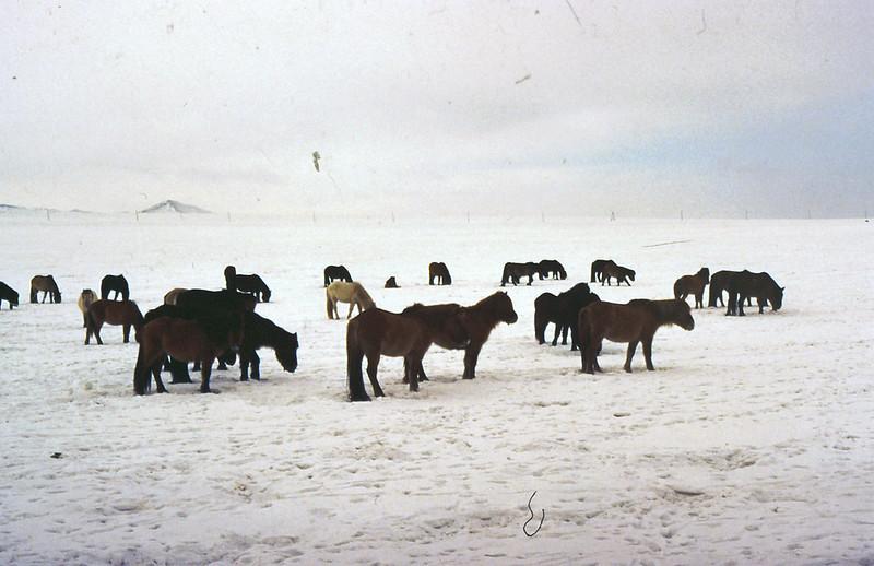 MONGOLIA 1994 01-0008