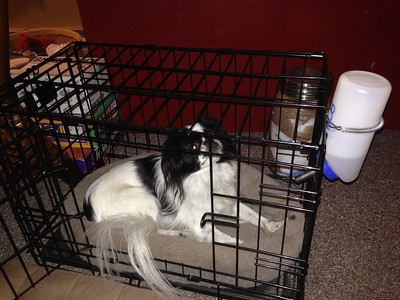 Oliver in his Kennel