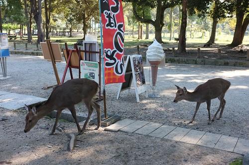 More Deer | by MatthewW