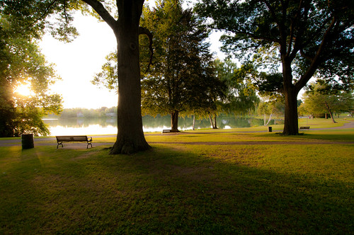 park trees light summer green sunrise shadows massachusetts newengland wakefield lakequannapowitt
