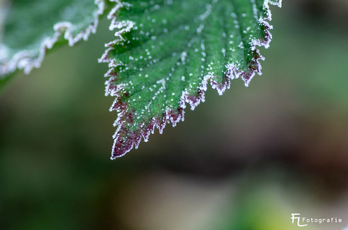 Erster Frost | by Silbersurfer