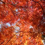 常寂光寺 嵐山-kyoto Jojakko-ji Japan