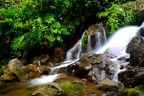 water forest landscape island waterfall view tropical terre caribbean cascade chute forêt guadeloupe basse île caraïbes cabret