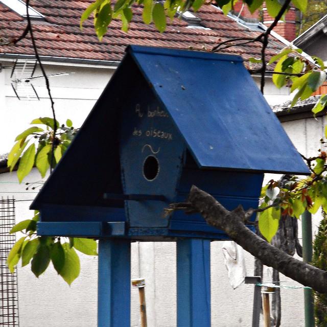 8 - C'est une maison bleue... pour les oiseaux