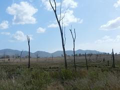 Blattlos-Bäume - Bruce Highway