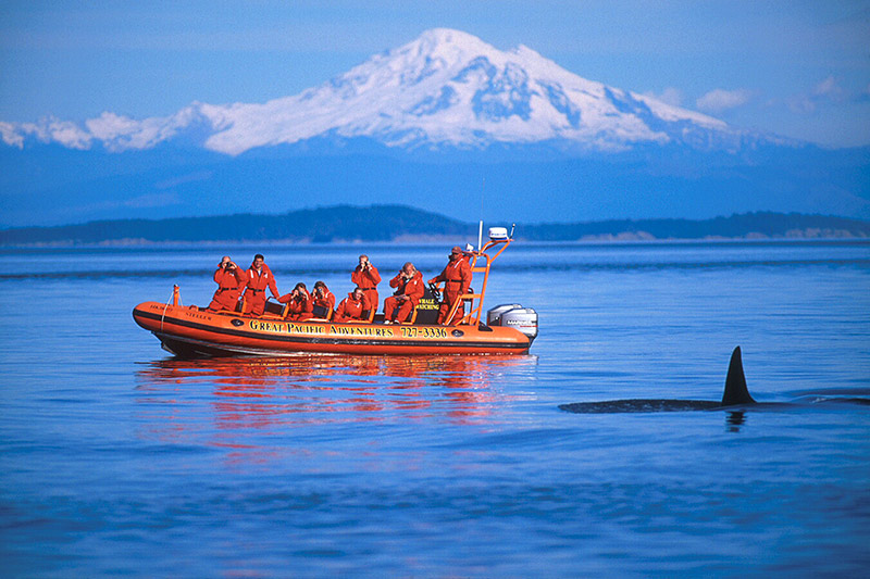 Whales and Whale Watching, Victoria, Vancouver Island, British Columbia