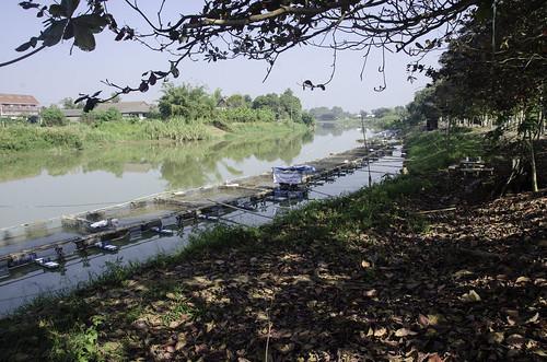 trees lake water leaves creek river thailand waterfall pond stream chiangmai eddy nets fishfarm thawangtan