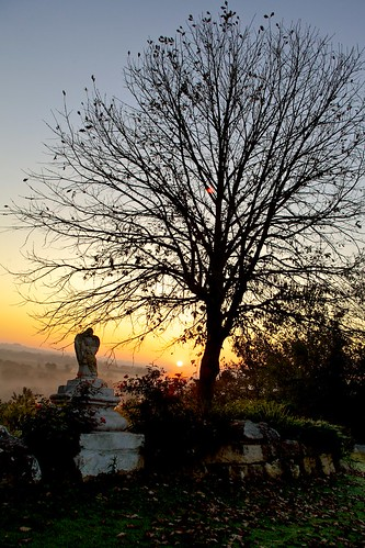 morning autumn light sun color tree fall grass leaves statue fog angel sunrise landscape kentucky ky louisville hopewell daybreak