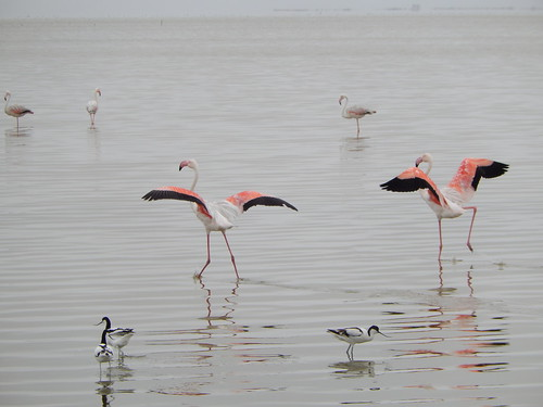 Walvis baai - flamingos schrikken