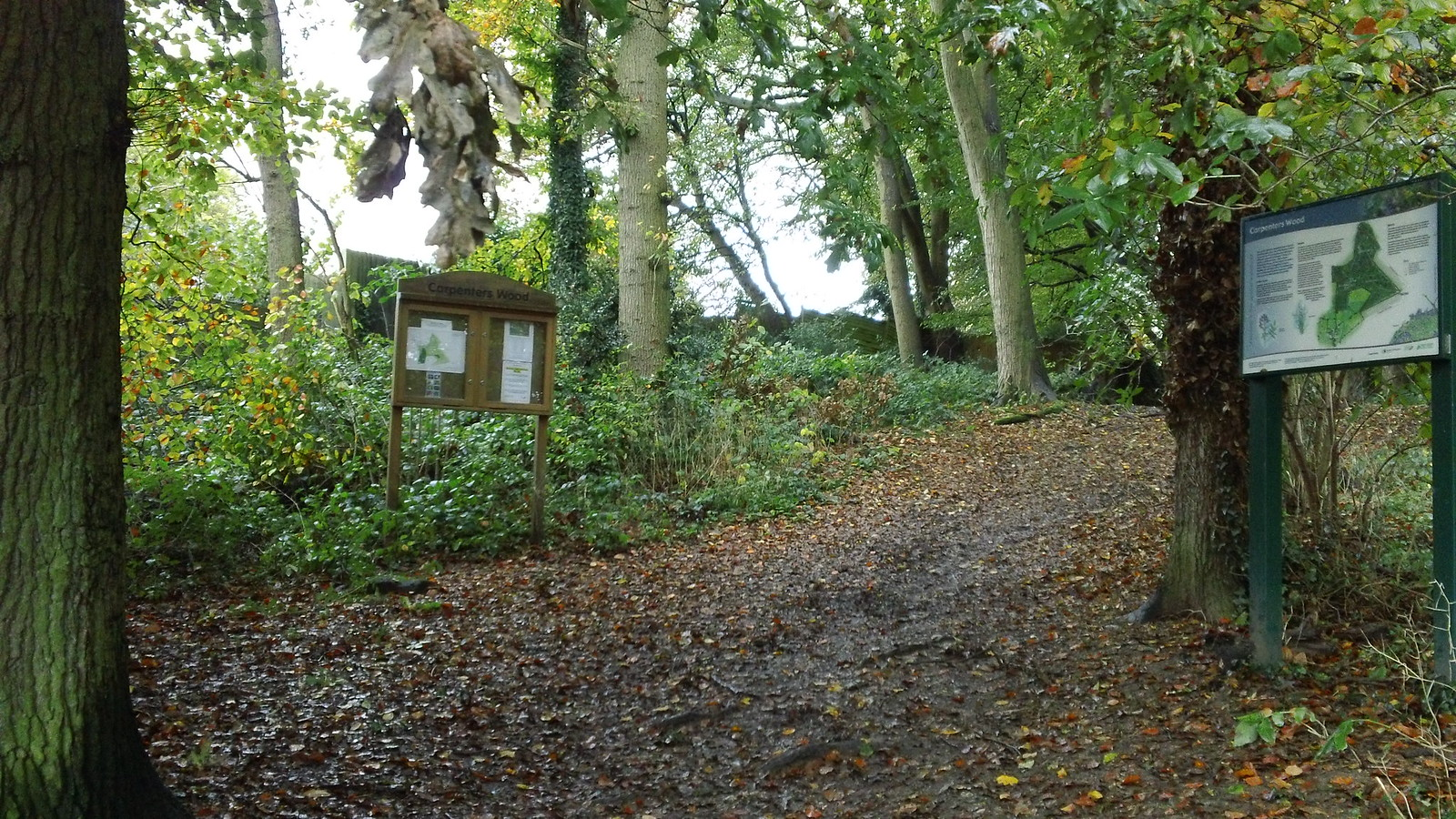 Carpenters Wood Start of an easy and nice stroll to Chenies