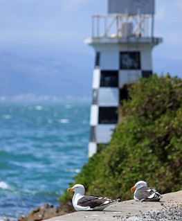 Seagulls, Pt Halswell