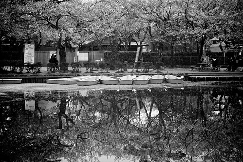 longexposure trees plant flower reflection tourism nature water japan season boats outdoors spring pond flora quiet peaceful nobody symmetry illuminated 桜 cherryblossom 日本 flowering sakura moat japaneseculture touristattraction hanami temporal springtime blooming blackandwhitephotography rm tranquilscene eastasia 花見 cherryblossomviewing japanesecastle traveldestinations beautyinnature alamy 新潟県 niigataprefecture japanesetradition stockcategories 高田城 上越市 高田公園 unrecognizableperson incidentalpeople takadacastle joetsucity lumixgvario35100f28 jōetsushi takadakoencherryblossomfestival takadacastleparkcherryblossomviewingfestival boatingarena