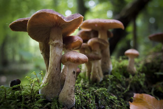 Family of Mushrooms   by LukePricePhotography