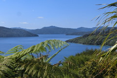 Am Queen Charlotte Track