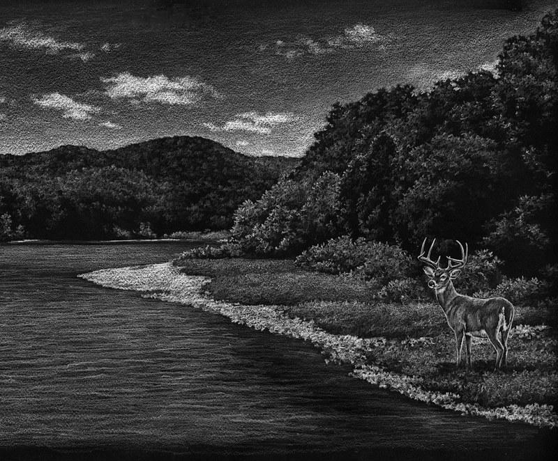 Deer on Riverbank