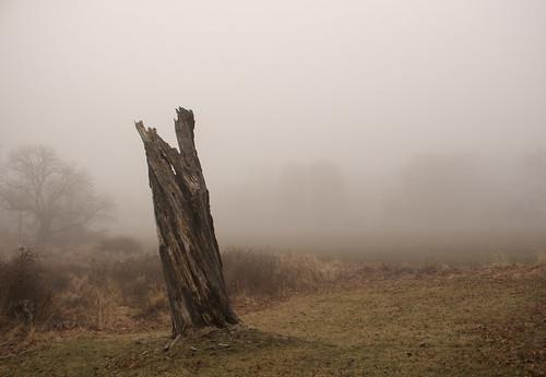 shel silverstein giving tree stump fog