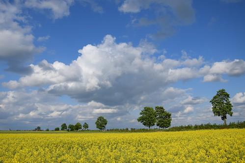 landscape view spring nature clouds sky blue white yellow canola tree green trees łódzkie lodzkie polska poland sunny weather windy flowers