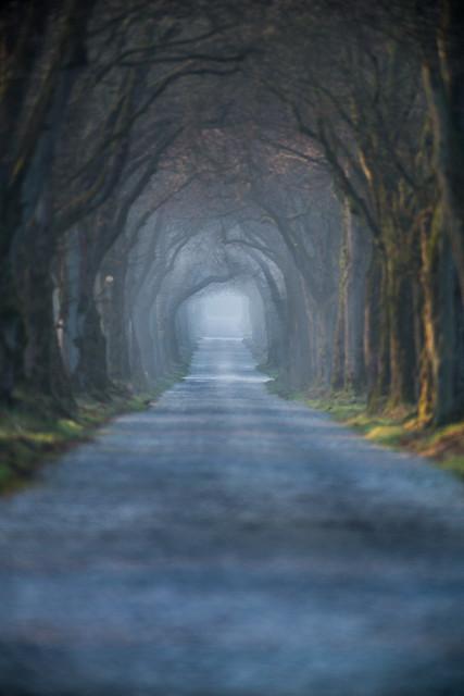 Baum-Tunnel