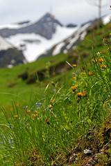 Säntis in Spring