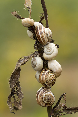 Caracois / Snails | by Nuno's Photo Warehouse