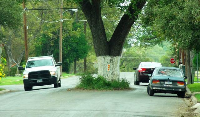 uvalde-tree-in-street