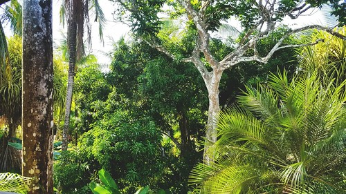 costarica manuelantonio coast april vacation centralamerica thefallsresort garden tropical trees