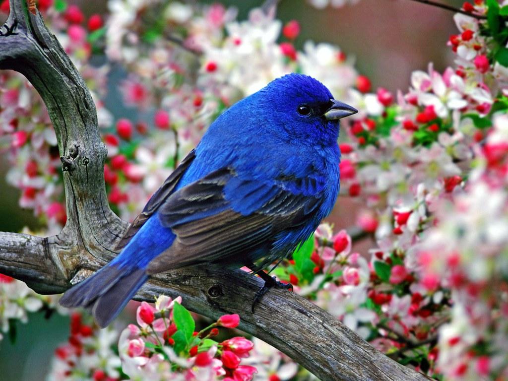 Colourful-Amazing-Flying-Birds-cute-HD-Desktop-Wallpapers