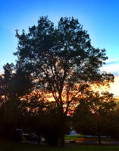 sunset tree manlius photo365
