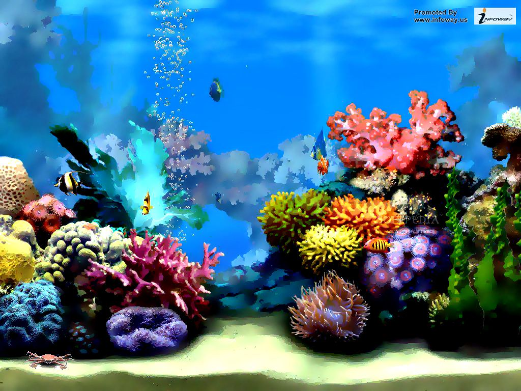 under the sea hd wallpaper under the