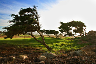 Wind Swept Cypress | by Simon__X