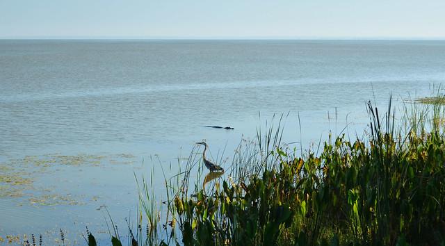 Lake Apopka, FL