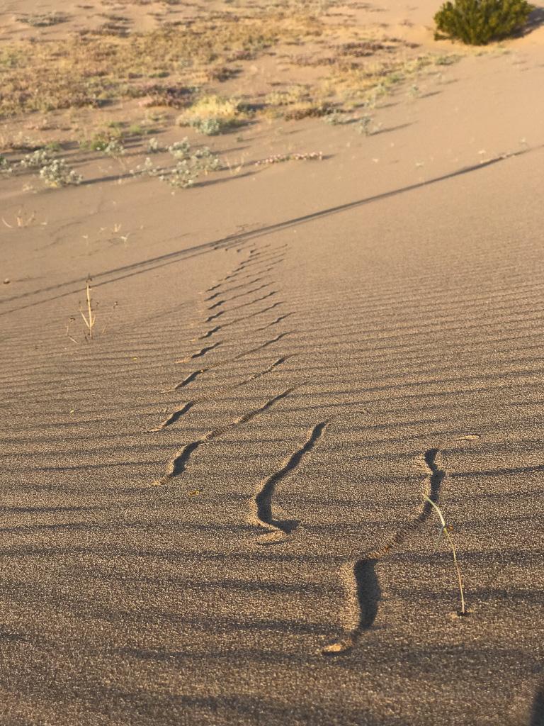 Sidewinder Rattlesnake Tracks | Jeff Sullivan | Flickr